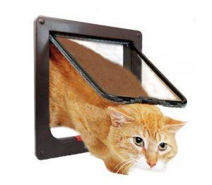 רשת מעבר חתולים - דינמיקה רשתות